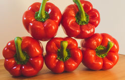 spansk pepparred Royaltyfri Bild
