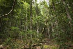 Spansk skog i 'Cola de Caballo ', arkivfoto