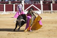 Spansk tjurfäktareMorante de la Puebla med capote- eller uddebullfightingen kallade chicuelina en tjur av nästan 600 kg under a Royaltyfria Bilder