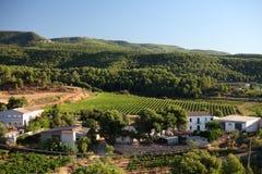 spansk vingård Arkivfoton