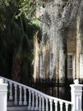Spanska Moss Dripping från träd fotografering för bildbyråer