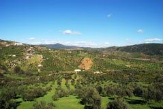 Spanska olivgröna dungar, Casarabonela royaltyfri foto