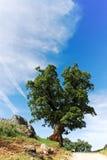 Spanska toppiga bergskedjor träd på smutsbanan Royaltyfri Bild