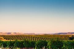 Spanskt vingårdlandskap Arkivfoto