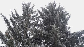 Spar in de winter stock videobeelden