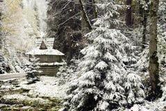 Spar die met sneeuw wordt behandeld Royalty-vrije Stock Foto's