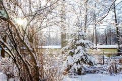 Spar en struiken in de sneeuw stock fotografie