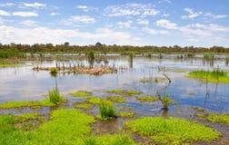 Spara de Beelier våtmarkerna, västra Australien arkivbilder