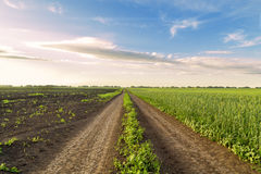 Spara il campo dell'agricoltore della patata Immagini Stock