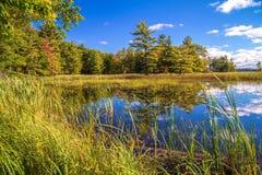 Spara våtmarkerna fotografering för bildbyråer