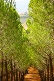 Sparaanplanting Royalty-vrije Stock Afbeelding