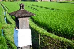 sparad rice Royaltyfri Fotografi