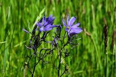 Sparade blommor Arkivbilder