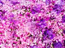 Sparade orkidér Arkivfoto