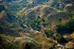 sparade riceterrasser Arkivbilder
