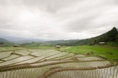 Sparade ris terrasserar i skördsäsong på den nordliga delen av Thailan Arkivfoto