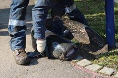 Sparande av fisken Royaltyfria Foton