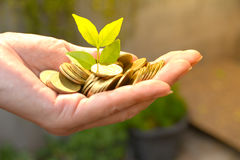 Sparande mynt för pengar för för pengarbegrepp och hand hållande med trädgrowi royaltyfri foto