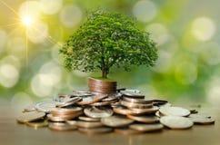 Sparande pengar för pengartillväxt Övrevisat begrepp för trädmynt av den växande affären arkivbild