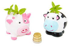 Sparandepengar med Piggy grupper Royaltyfri Fotografi