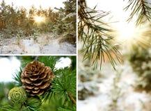 Sparappel in de winterbos Stock Afbeeldingen