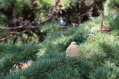 Sparappel op een tak in het bos Royalty-vrije Stock Foto