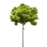 sparar det gröna isolerade planet för begreppet liten treewhite royaltyfria bilder