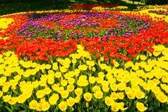 Sparat av röda och gula tulpan royaltyfri bild