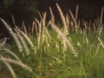 Sparat gräs fotografering för bildbyråer