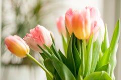 Sparato dei tulipani che stanno contro la finestra a casa Fotografia Stock