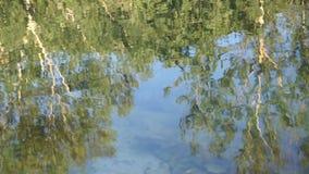 Sparato del lago scenico di estate Fondo unfocused vago della natura video d archivio
