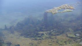 Sparato del lago scenico di estate Fondo unfocused vago della natura stock footage