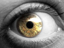 Sparato dell'occhio dorato Immagini Stock Libere da Diritti