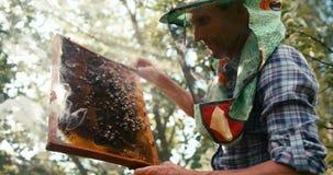 Sparato sulla macchina fotografica ROSSA L'apicoltore anziano sta tenendo il favo sulla struttura di legno Sta occupandosi delle  stock footage