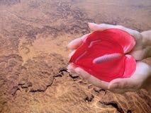 Sparen Aarde. Handen, hartbloem, water, woestijn. Stock Afbeelding