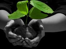 Sparen bomen royalty-vrije stock afbeeldingen