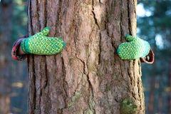 Sparen boomconcept: handen rond de pijnboom Royalty-vrije Stock Afbeelding