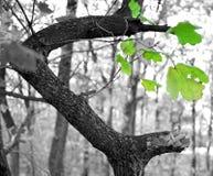 Sparen de bossen stock fotografie