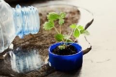 Sparen de fotografie van het het ontwerpconcept van watereco Knelpunt en het groene spruit groeien in kroonkurk macromeningspatro Stock Fotografie