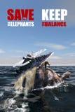 Sparen de olifanten - houd het saldo Royalty-vrije Stock Foto