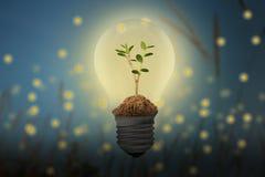 Sparen Sie Energie, mit dem Leuchtkäfer- und Birnenkonzept lizenzfreie abbildung