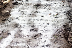 Sparga la polvere della pietra calcarea Immagini Stock