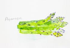 Spargelaquarell gemalt Lizenzfreies Stockfoto