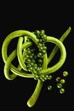 Spargelbohne (Vigna unguiculata sesquipedalis) und grüne Pfefferkörner, Nahaufnahme Lizenzfreies Stockfoto