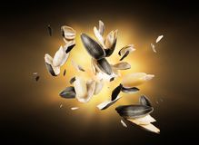 Spargimento sbucciato dei semi di girasole nello scuro Immagini Stock