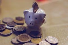 Spargris besparingar, valuta mynt Lite svin royaltyfri fotografi