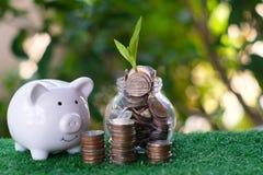 Spargris och hög eller mynt Växten som växer från högen av mynt, ser till sparande- och investeringbegreppet arkivfoto