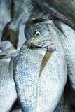 Sparidae Sea bream on fish market.  royalty free stock photography