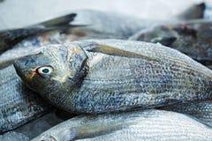 Sparidae Sea bream on fish market.  stock photo