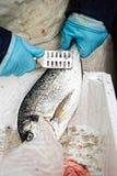 Sparidae Sea bream on fish market.  stock image